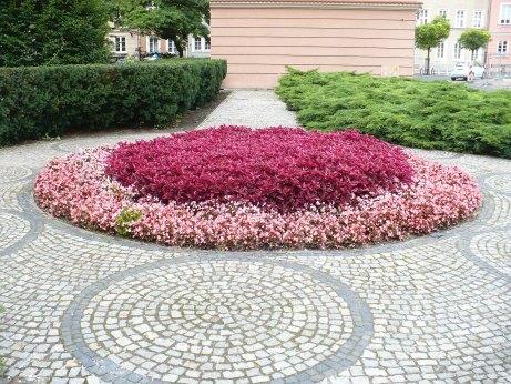 Irezyna Herbsta na kwietniku