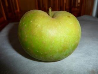 Boskoop owoc