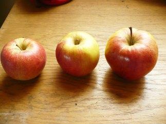 jabłko champion i jonagold