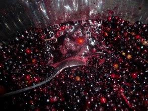 Bez czarny owoce sok Sambucus nigra fruits